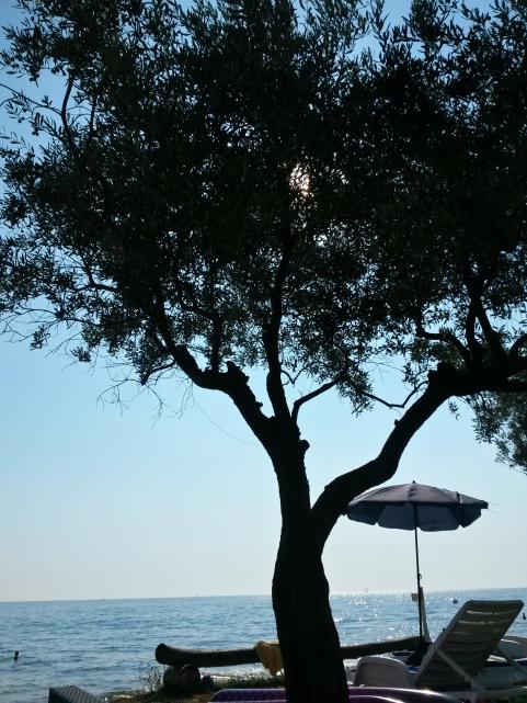 Unter Olivenbäumen am Strand in Rovinj